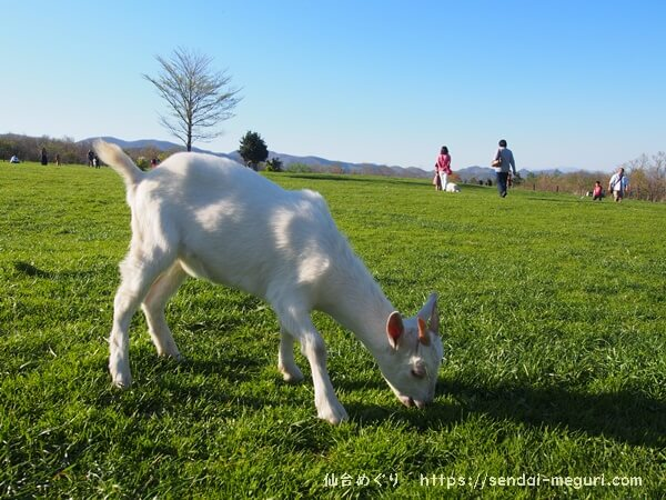 「蔵王ハートランド」無料で動物とふれあえる牧場。グルメやお土産も豊富で家族で楽しめる