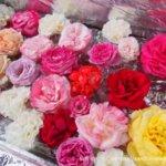 体験レポ|せんだい農業園芸センター|バラ祭り2019を鑑賞。無料で楽しめるガーデニング