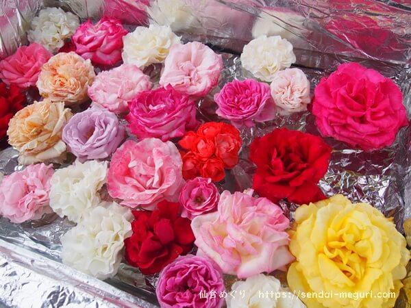 「せんだい農業園芸センター」のバラ祭り2019。広大なガーデニングを無料で楽しめる