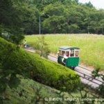 体験レポ|初日でほぼ満開!無料で楽しめる大崎市のコスモス園で幻の人車体験がおすすめ