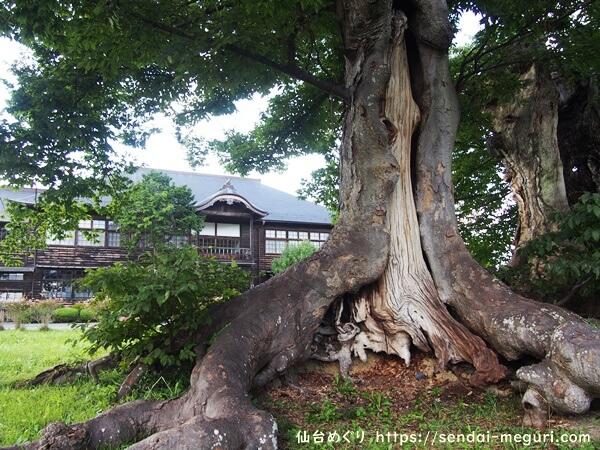 見学レポ|旧金成小学校|樹齢600年のケヤキと明治の擬洋風建築が絶景!もっと知られるべき穴場スポット