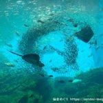 体験レポ|仙台うみの杜水族館|大迫力イワシの大群がすごい!個性的な演出が観客の心をつかむ