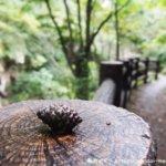 仙台 磊々峡の景色