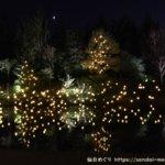 体験レポ|SENDAI光のページェントin泉パークタウン|ランタンの光で森に誘われてメルヘンの世界へ