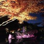 体験レポ|秋保ナイトミュージアム2019|見どころ豊富で子供も喜ぶ紅葉ライトアップ