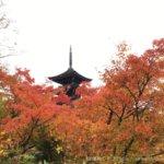 体験レポ|定義如来 西方寺|五重塔と紅葉のコントラストが美しい!穴場の紅葉スポットも発見