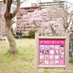2020年仙台の桜の開花