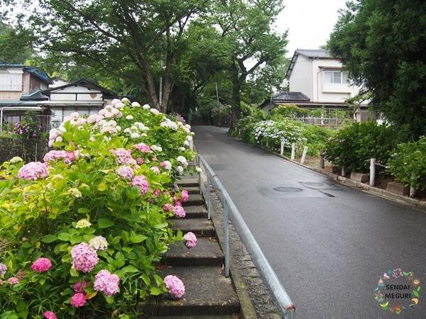 仙台の資福寺の紫陽花