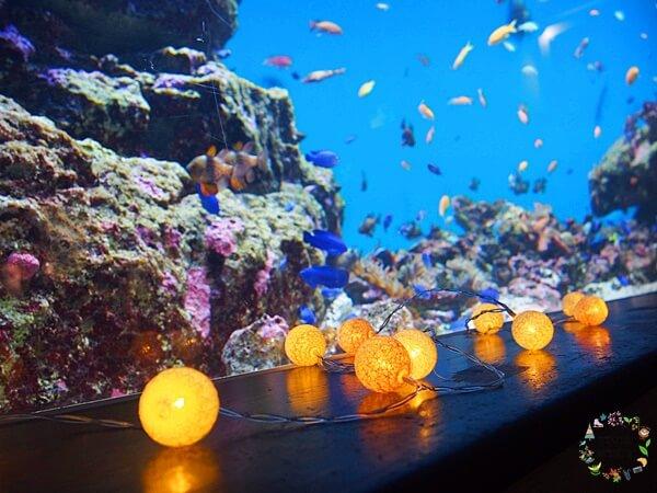 仙台うみの杜水族館ナイトアクアリウム2020
